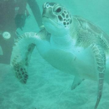 Plongée sous marine à Tenerife - Iles Canaries - mars 2008